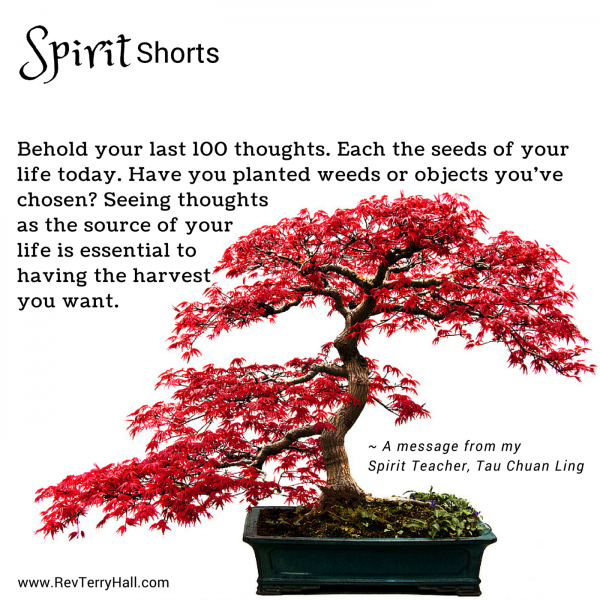 Behold your last 100 thoughts. Each the seeds of your life today. Have you planted weeds or objects you've chosen? Seeing thoughts as the source of your life is essential to having the harvest you want.